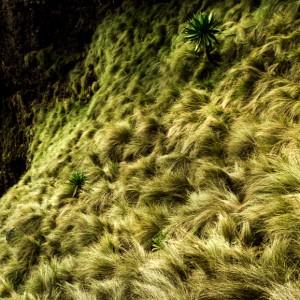 etiopia semien park
