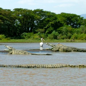 Chamo lake crocodiles ethiopia