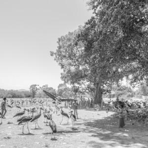 ziway lake ethiopia