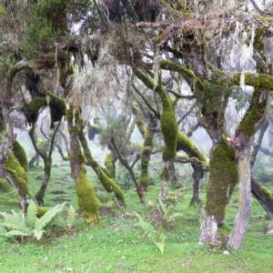 Bale harenna forest Ethiopia tour
