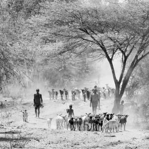 hamer region ethiopia