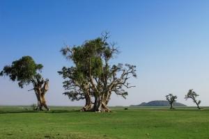 Ziway lake birds ethiopia rift valley