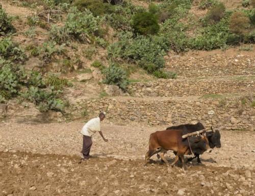 """I """"Guardiani del Paesaggio"""" in Etiopia"""